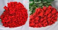 букет роз в Служба доставки цветов «Букет «112»