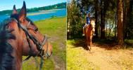 конная прогулка в КСК Golden Horses
