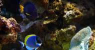 океанариум в Морской аквариум на Чистых прудах