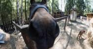 животные в «Контактный этнозоопарк»