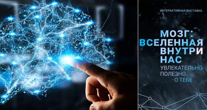 Скидки до 51% на выставку «Мозг: Вселенная внутри нас» в Brain work group